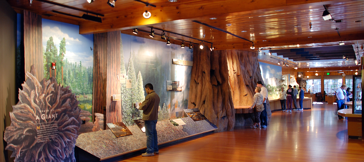 Inside Giant Forest Museum